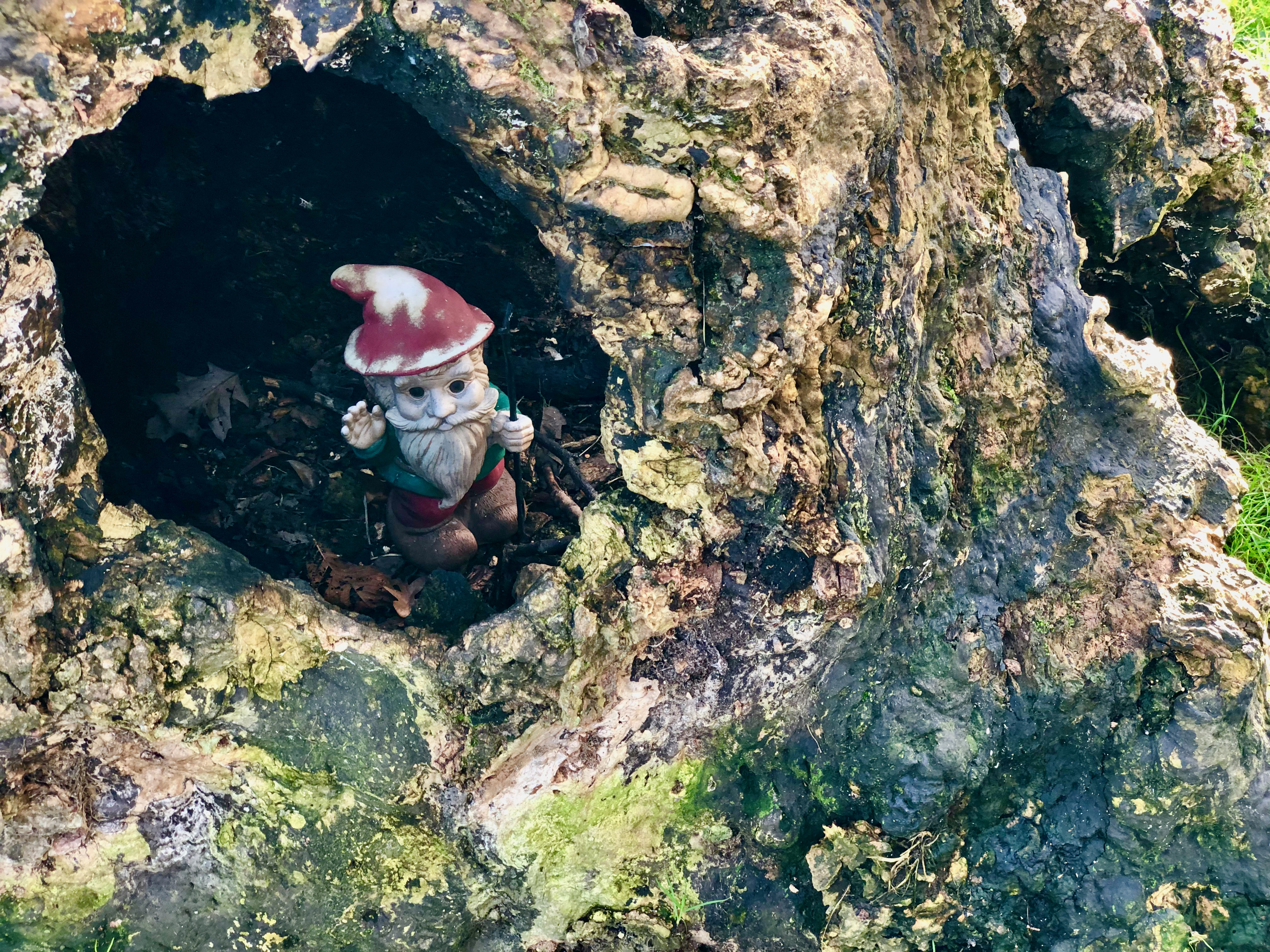 In a hole in a tree there lived a gnome