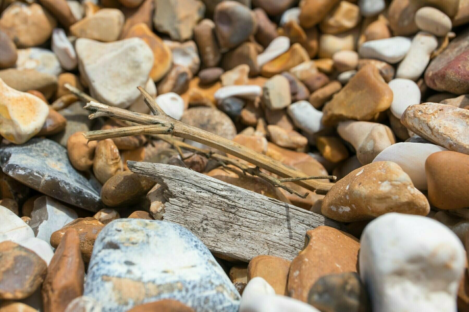 Driftwood on Shoreham Beach.