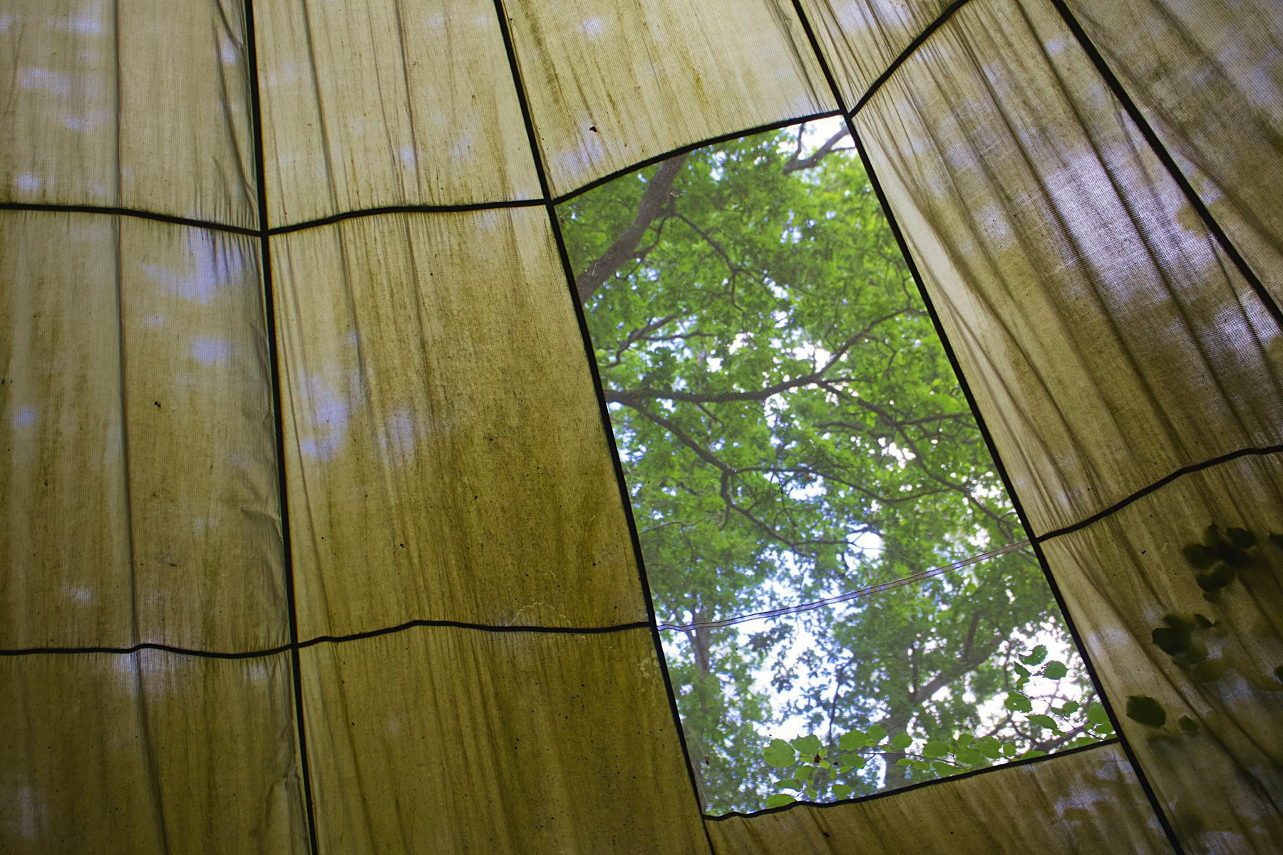 Trees seen through a canopy window at Woods Mill in Sussex.