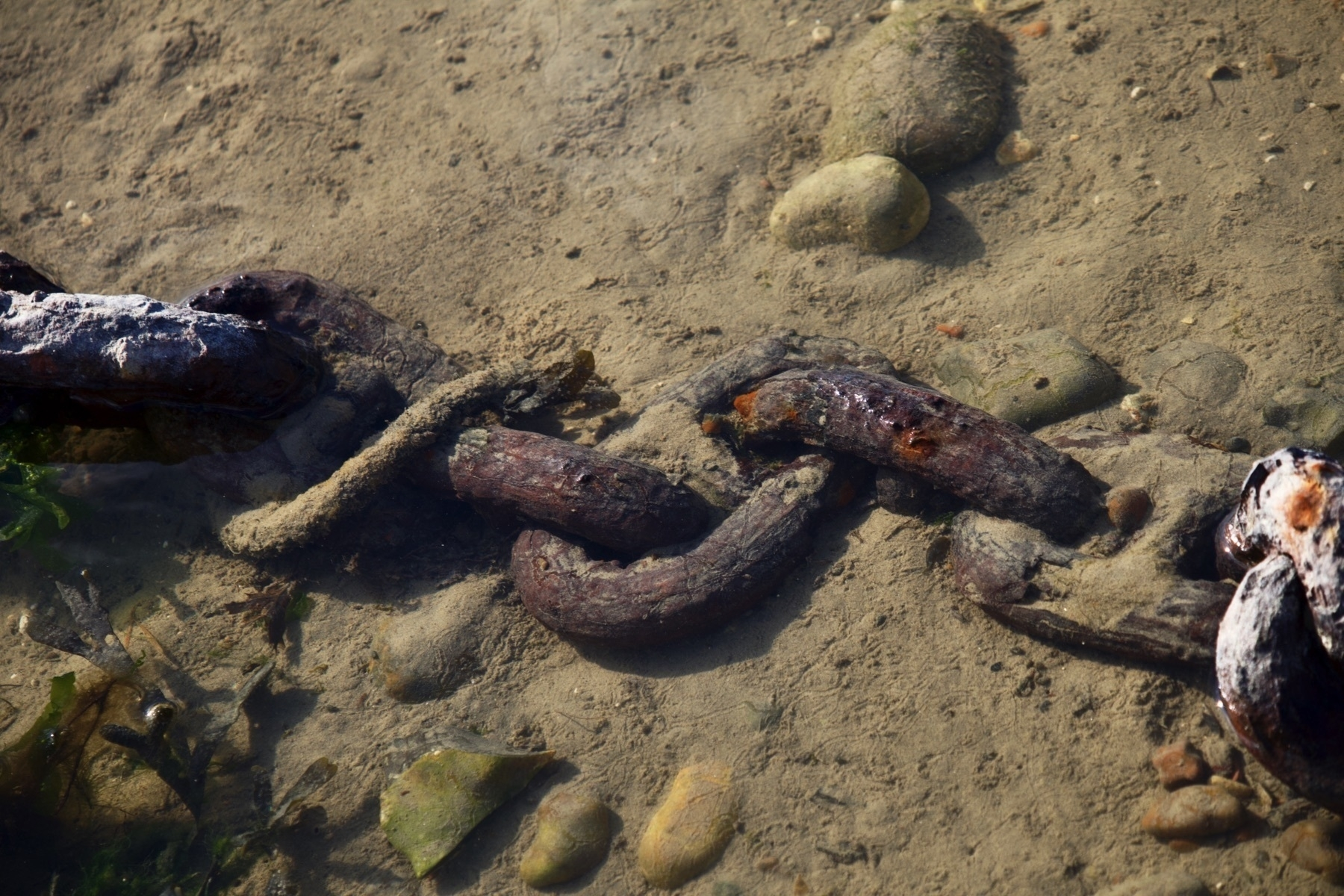 A chain in the Adur at low tide.