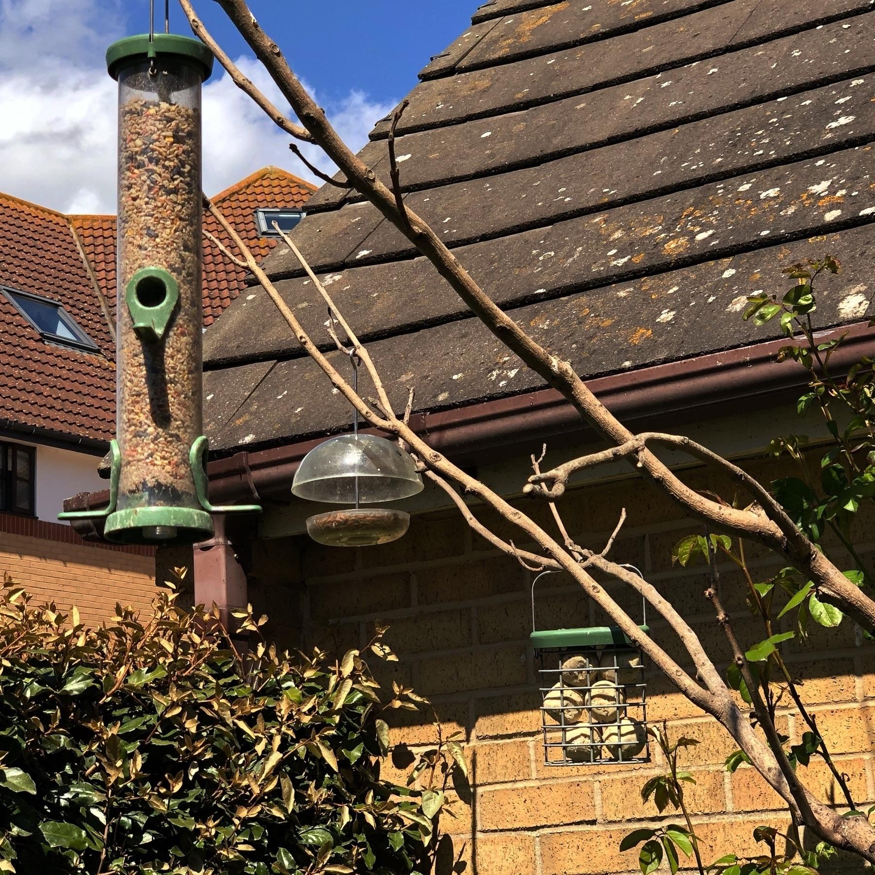 Bird feeders in a back garden.